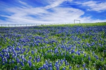 Texas Adoption Requirements: Complete Guide